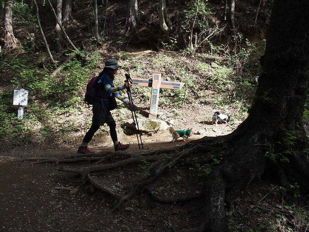御岳山・日の出山へ犬連れマイカー登山<つるつる温泉~日の出山/御岳山~つるつる温泉>14