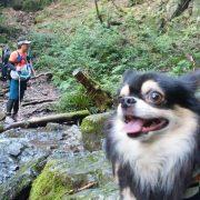 棒ノ折山(棒ノ嶺)へ犬連れマイカー登山<さわらびの湯~棒ノ折山~さわらびの湯>