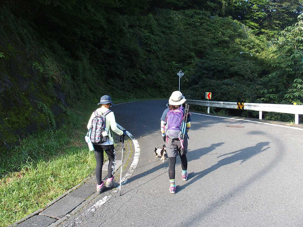 棒ノ折山(棒ノ嶺)へ犬連れマイカー登山<さわらびの湯~棒ノ折山~さわらびの湯>12