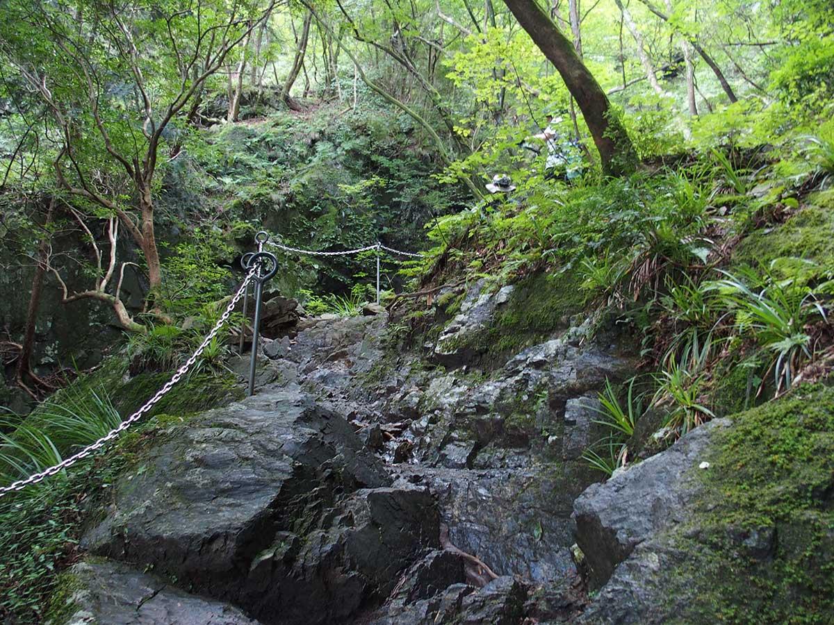 棒ノ折山(棒ノ嶺)へ犬連れマイカー登山<さわらびの湯~棒ノ折山~さわらびの湯>23