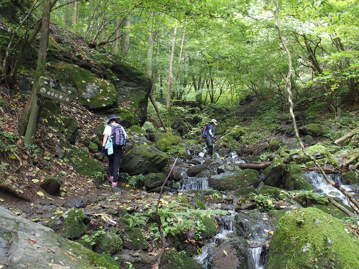 棒ノ折山(棒ノ嶺)へ犬連れマイカー登山<さわらびの湯~棒ノ折山~さわらびの湯>24