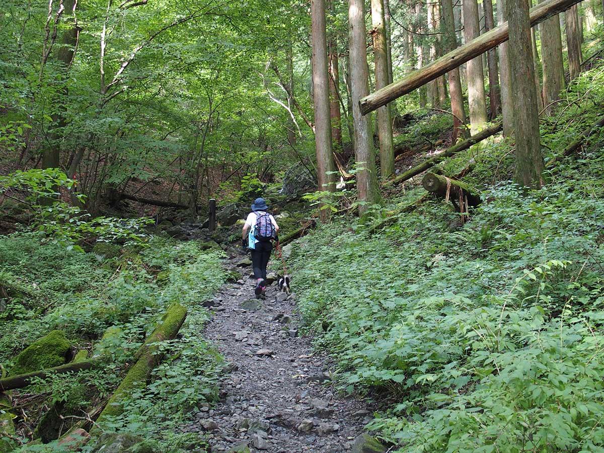 棒ノ折山(棒ノ嶺)へ犬連れマイカー登山<さわらびの湯~棒ノ折山~さわらびの湯>25
