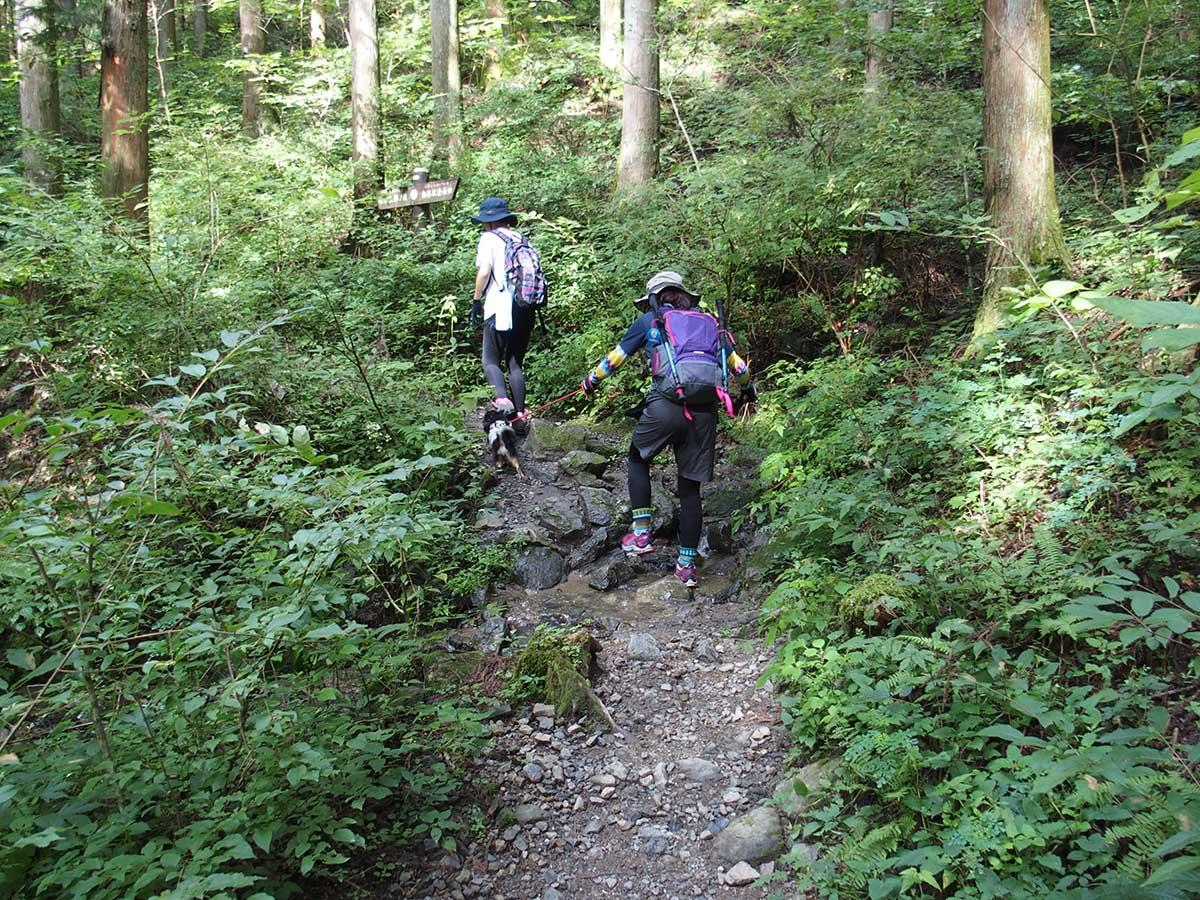 棒ノ折山(棒ノ嶺)へ犬連れマイカー登山<さわらびの湯~棒ノ折山~さわらびの湯>26