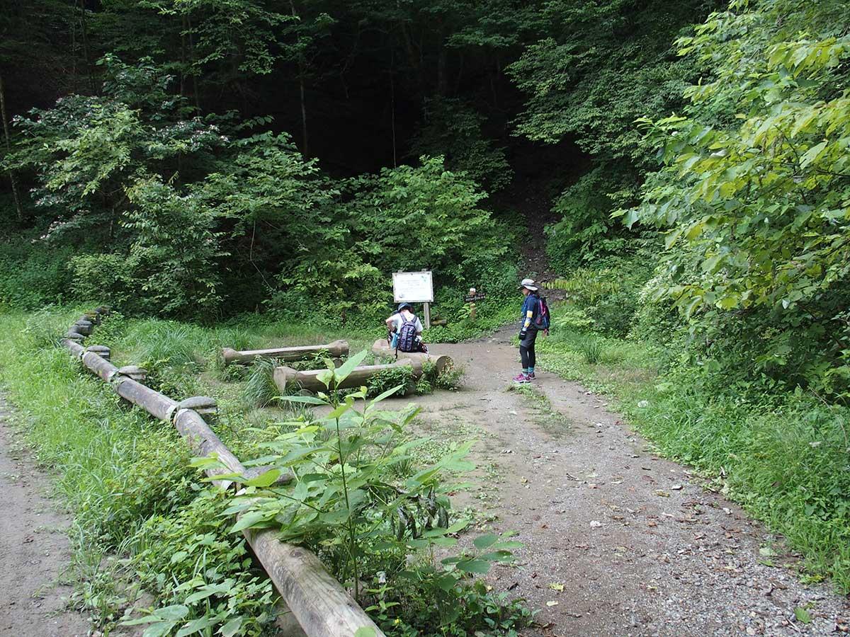 棒ノ折山(棒ノ嶺)へ犬連れマイカー登山<さわらびの湯~棒ノ折山~さわらびの湯>28