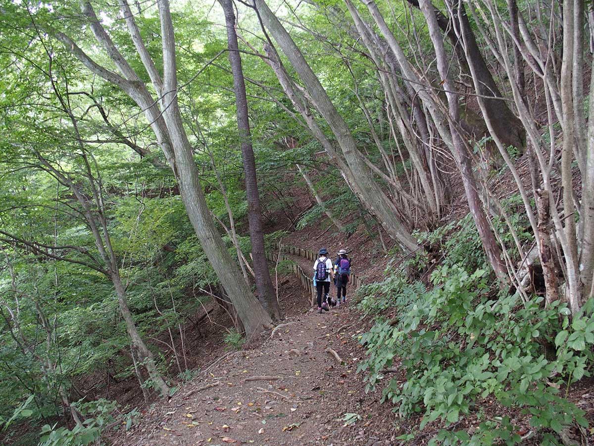 棒ノ折山(棒ノ嶺)へ犬連れマイカー登山<さわらびの湯~棒ノ折山~さわらびの湯>29