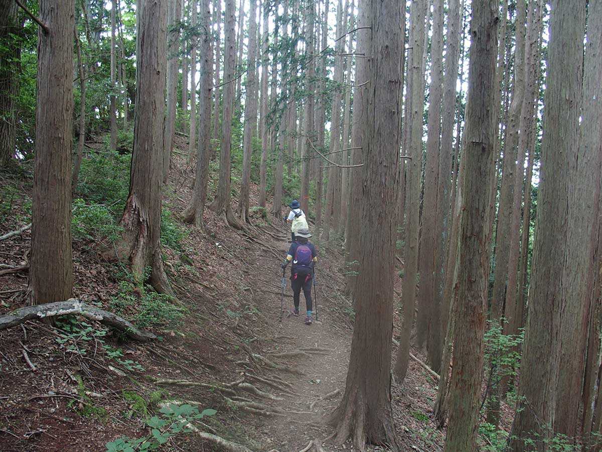 棒ノ折山(棒ノ嶺)へ犬連れマイカー登山<さわらびの湯~棒ノ折山~さわらびの湯>31