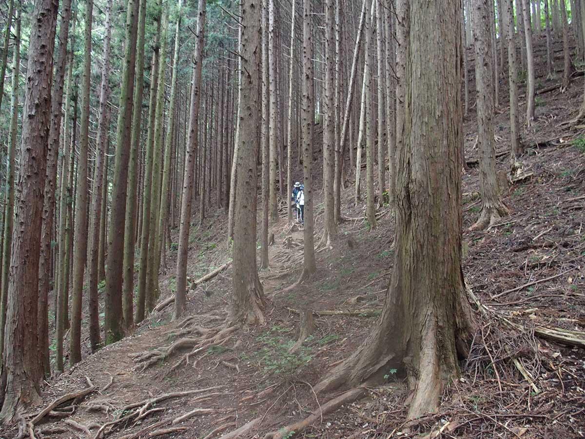 棒ノ折山(棒ノ嶺)へ犬連れマイカー登山<さわらびの湯~棒ノ折山~さわらびの湯>34