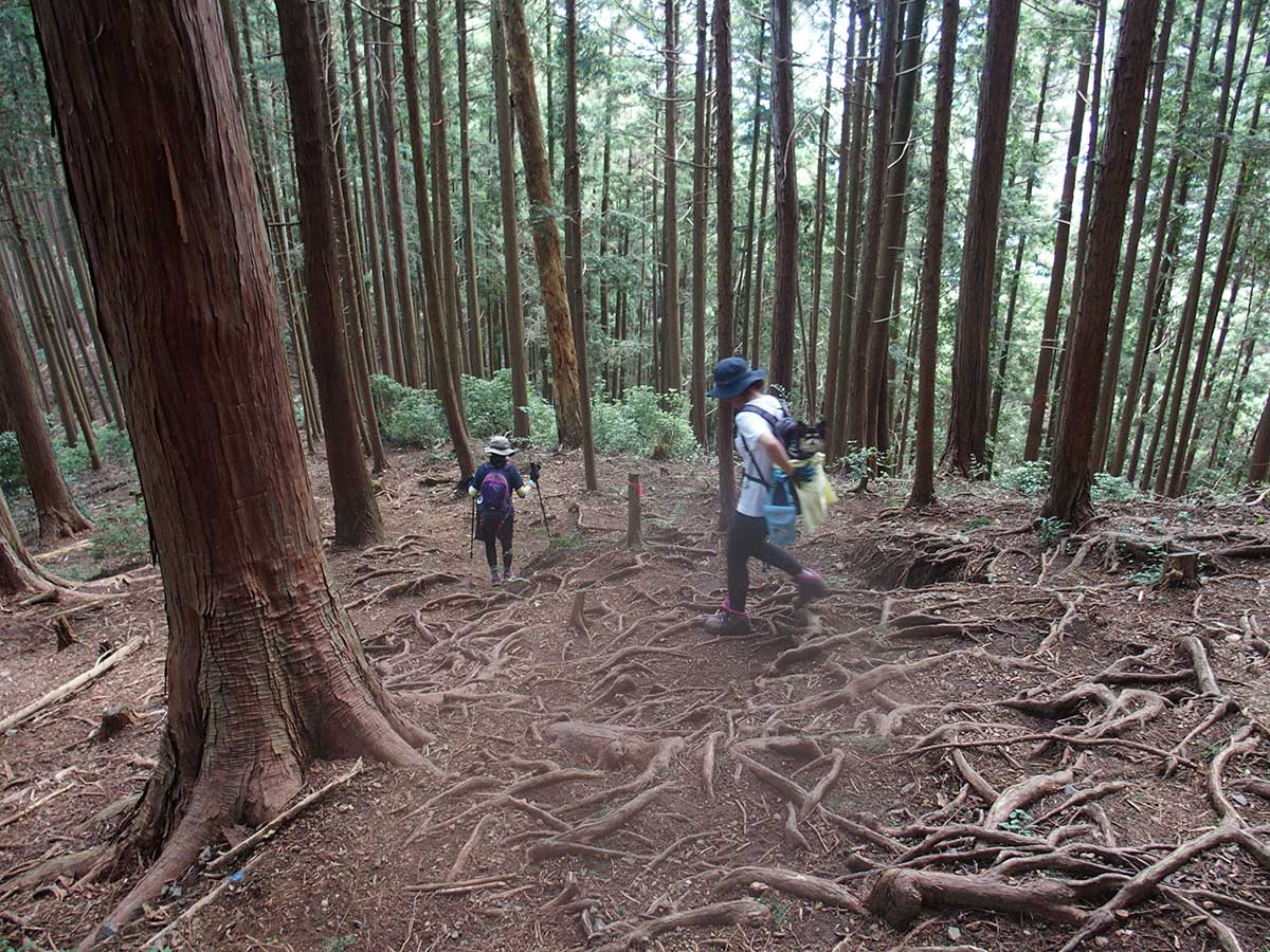 棒ノ折山(棒ノ嶺)へ犬連れマイカー登山<さわらびの湯~棒ノ折山~さわらびの湯>36