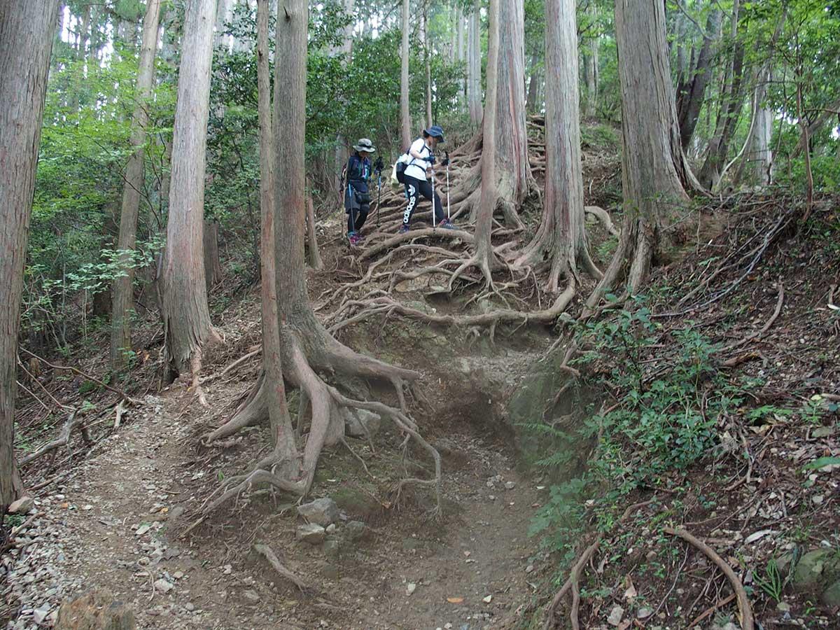 棒ノ折山(棒ノ嶺)へ犬連れマイカー登山<さわらびの湯~棒ノ折山~さわらびの湯>37