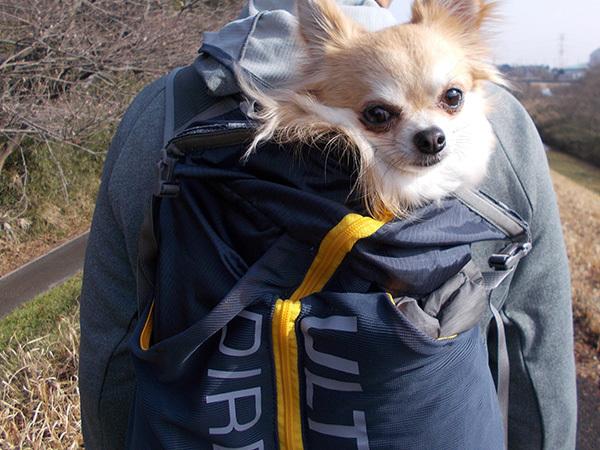 SUUNTO(スント)と犬とFASTPACK 15(ファストパック15)1