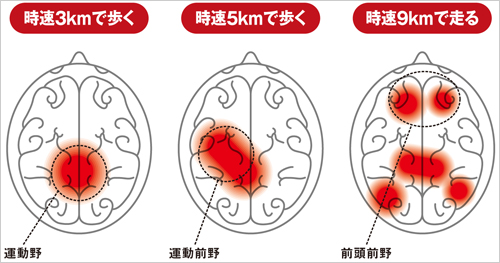 運動によって脳は活性化される