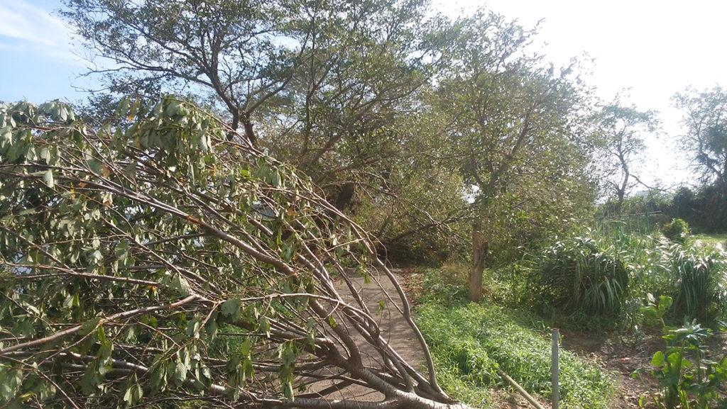台風の爪痕<台風15号、千葉市で最大瞬間風速57・5m>4
