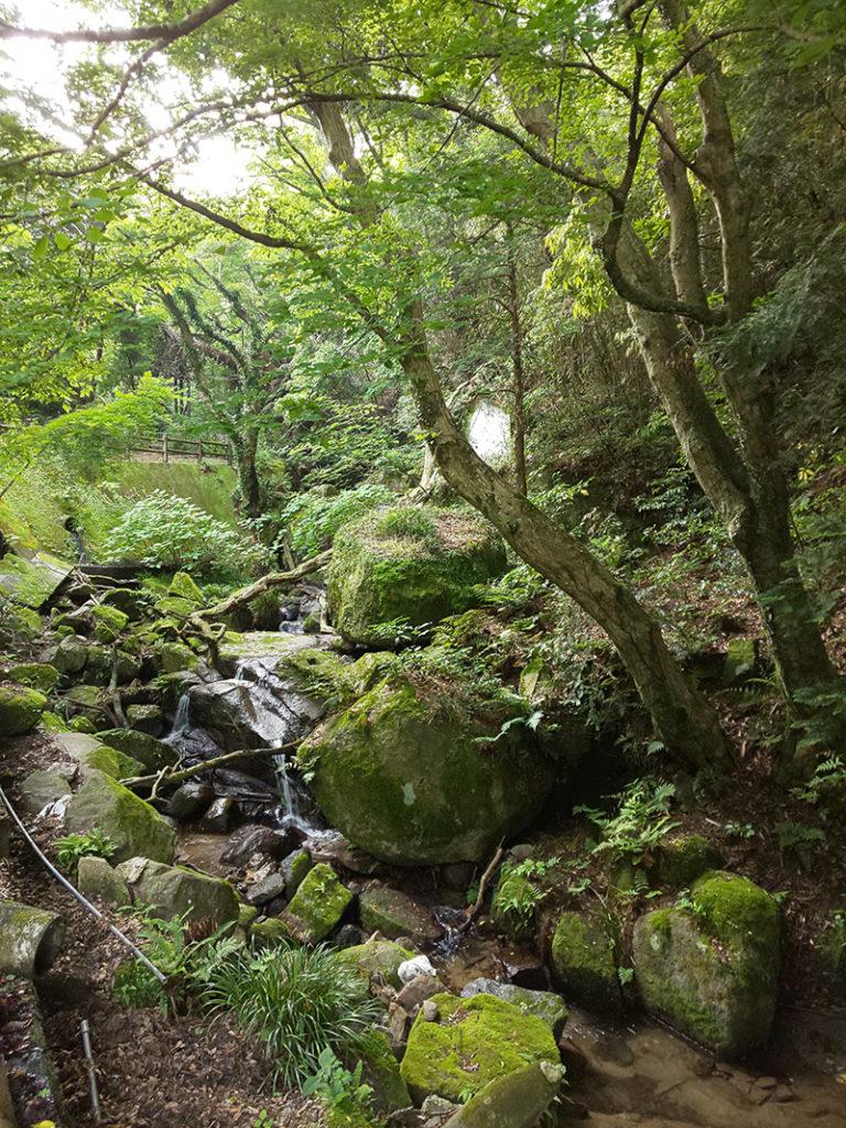 筑波山でリハビリ登山<巣篭り生活で体重が5キロ増!>2